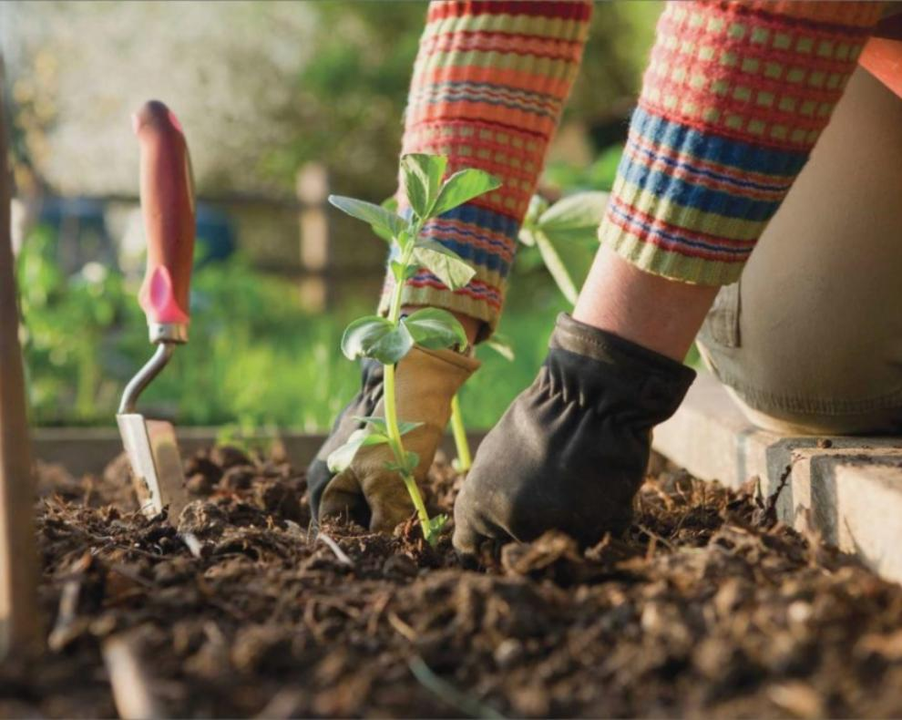 Travaux de Jardinage